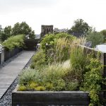 Ask the Expert: Roof Garden Basics with Designer Julie Farris - Gardenista