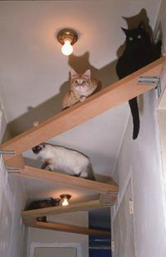 Cat Tree Plans In Space? Outta Control Cat Shelves! – Cool Cat Tree Plans