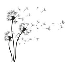 Dandelion. Wall Decal • Pixers® – We live to change