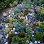 HOME DZINE Garden Ideas |  Create a Succulent Garden
