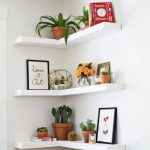 Small Indoor Garden Ideas | Domino
