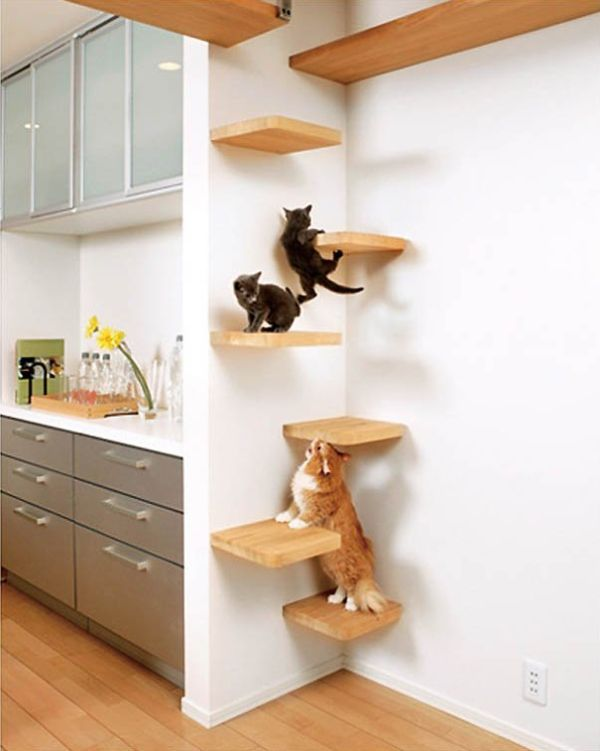 Take The Time To Build Cat Shelves: Fun For Both You And Your Pet .
