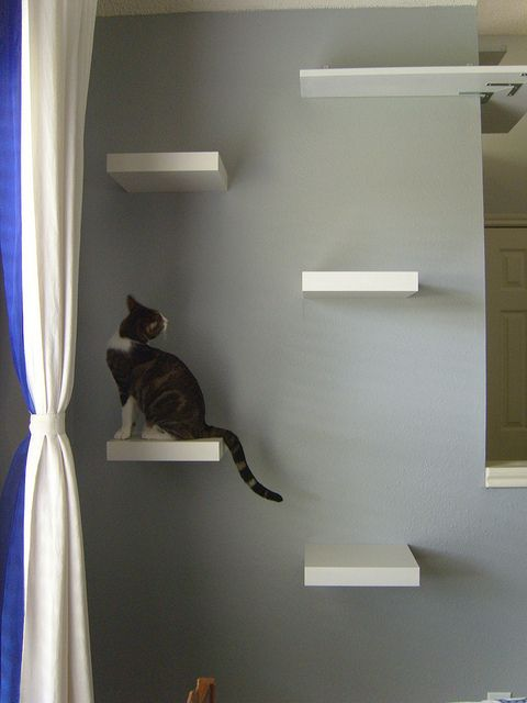 Cat shelves | Cat wall shelves, Ikea lack shelves, Cat shelv