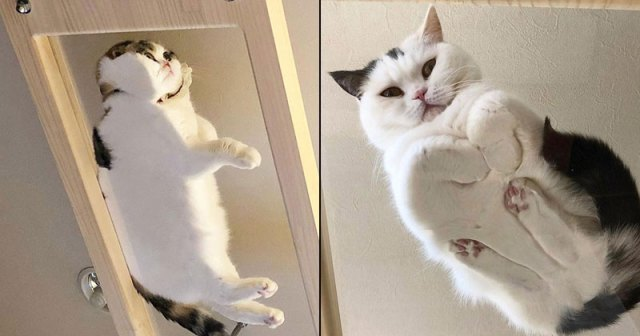 21 Photos of Cats Sitting on Glass Tables, Please Disregard .